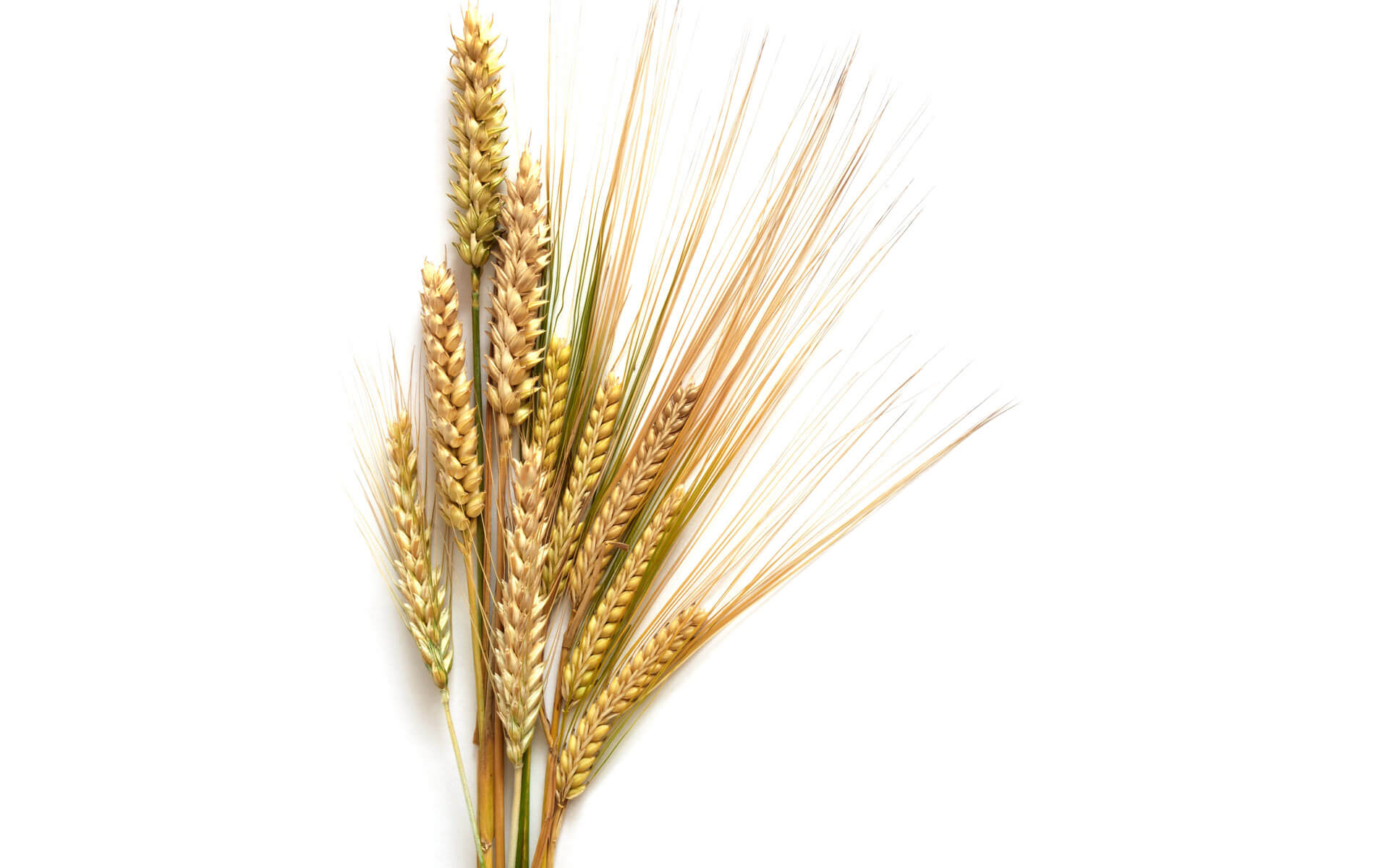 wheat makes you crazy ancestral nutrition